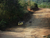 Donkeys on the road to Kikula